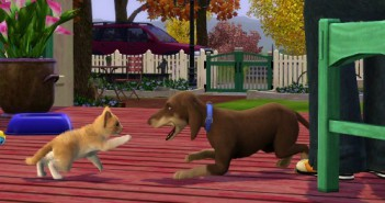 TS3_PETS_ANNOUNCE_CAT_DOG_PLAY_01