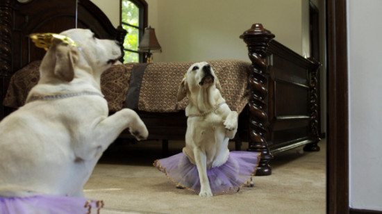 the dog _ ballerina